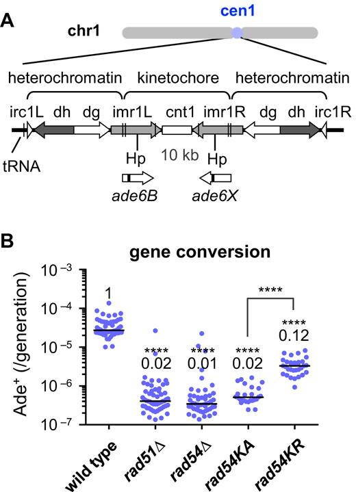 Rad51 And Rad54 Promote Noncrossover Recombination Between