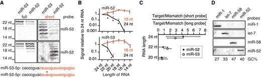 Removing bias against short sequences enables northern blotting to ...