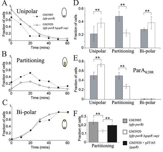 Novel Nucleoid Associated Protein Coordinates Chromosome Replication