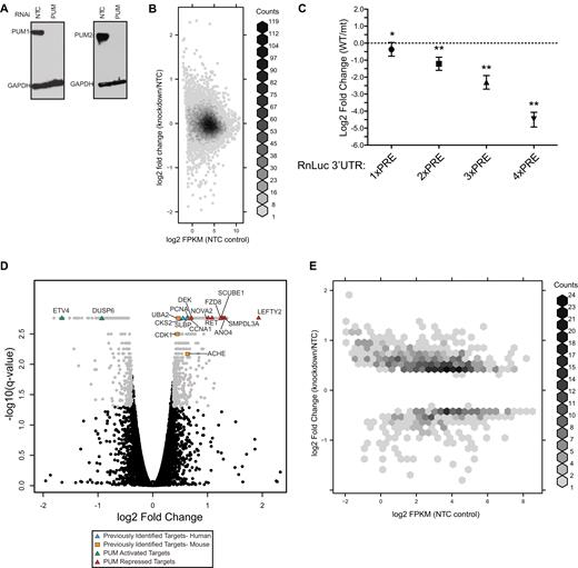 Identification Of Diverse Target Rnas That Are Functionally