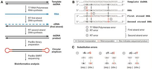 Base modifications affecting rna polymerase and reverse measuring combined transcription and reverse transcription fidelity with pacbio sequencing a workflow maxwellsz