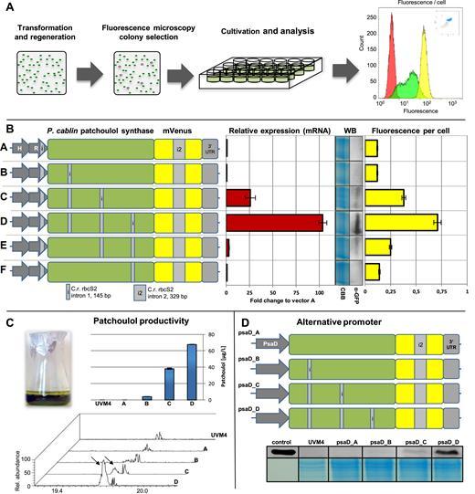 Intron Containing Algal Transgenes Mediate Efficient Recombinant