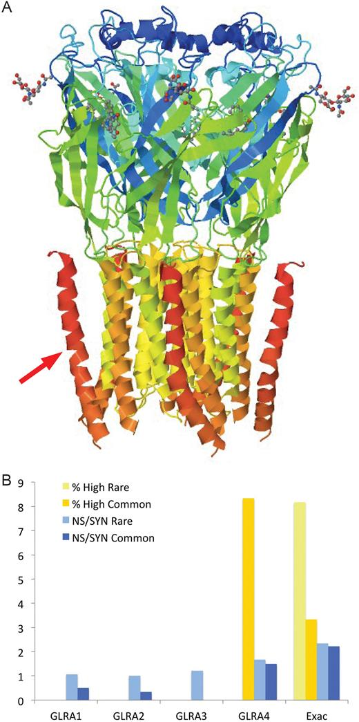 Glra4 Loss Of Trans Membrane Helix And Genetic Variation