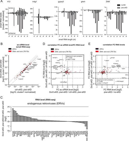Read Between The Bars: The SiRNA Pathway Participates In Somatic ERV Repression