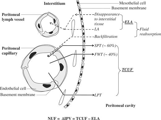 Cellular Contribution To Effluent Potassium And Its Relation To Free