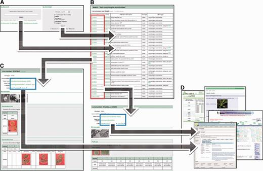Chloroplast function database ii a comprehensive collection of schematic representation of the workflow for the chloroplast function database ii a on ccuart Choice Image
