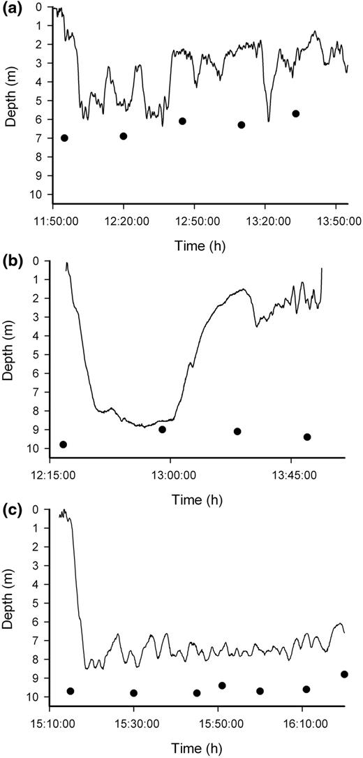 Diving Behaviour Of Jellyfish Equipped With Electronic Tags