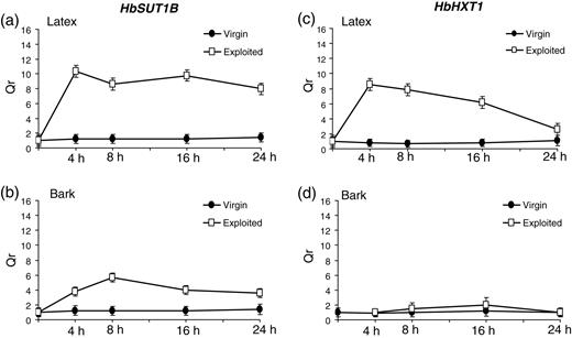 Ethylene Stimulation Of Latex Yield Depends On The Expression Of A