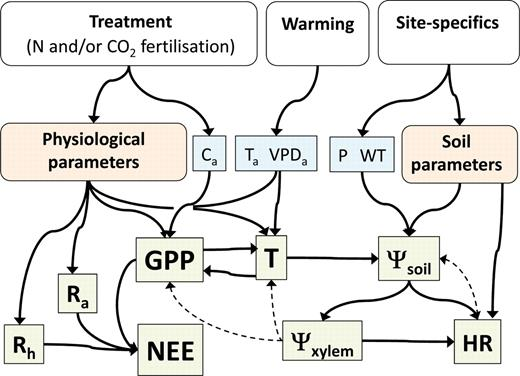 Interactive Effects Of Nocturnal Transpiration And Climate Change On